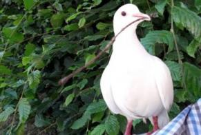 Disappearance alert Bird Female Strassen Luxembourg