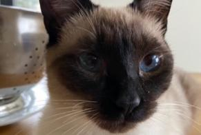 Disappearance alert Cat  Male , 1 years Steinsel Luxembourg