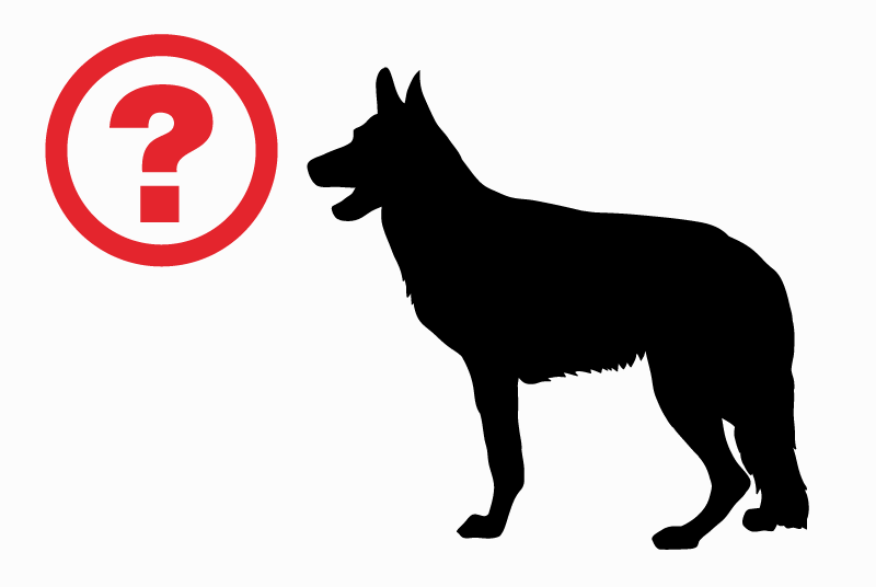 Discovery alert Dog  Unknown Ath Belgium